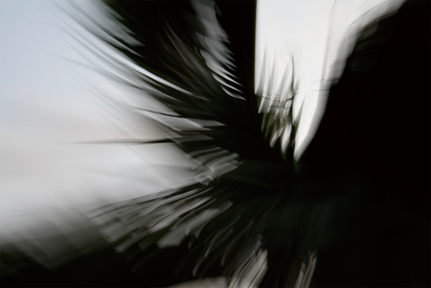 Satoko Nema Simulacre